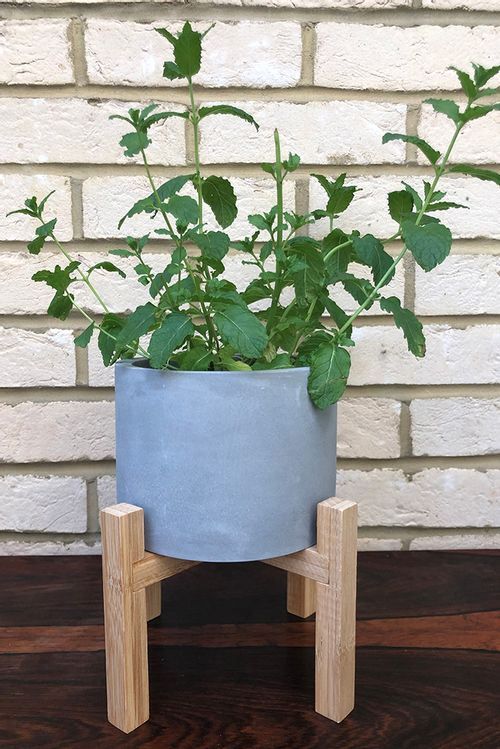 Concrete Planter On Wooden Stand 19X17Cm Multi  OR1108