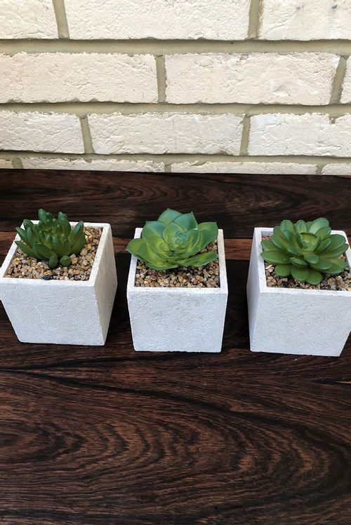 Set Of 3 Faux Potted Succulents